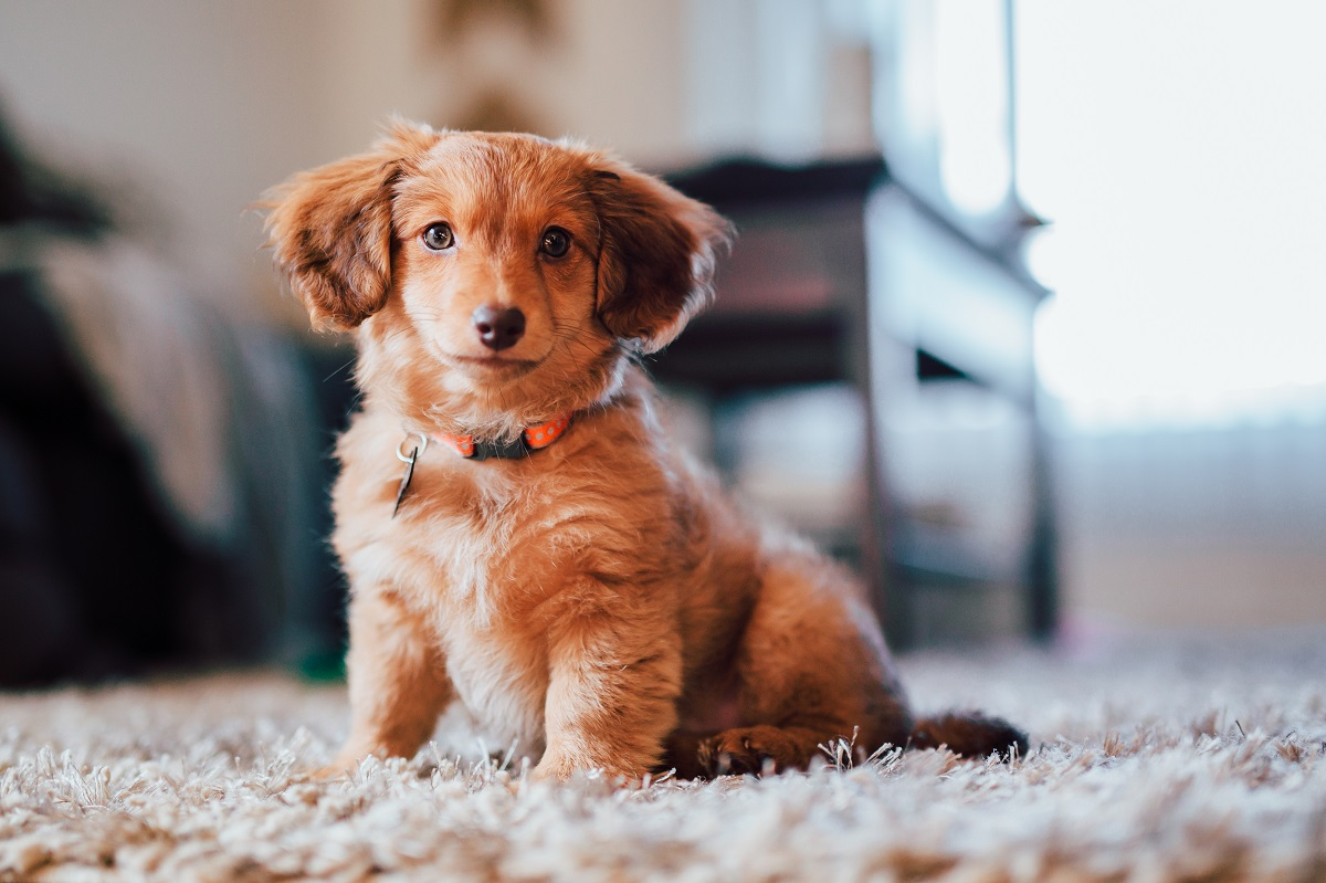 How you and your pets have to be stay health